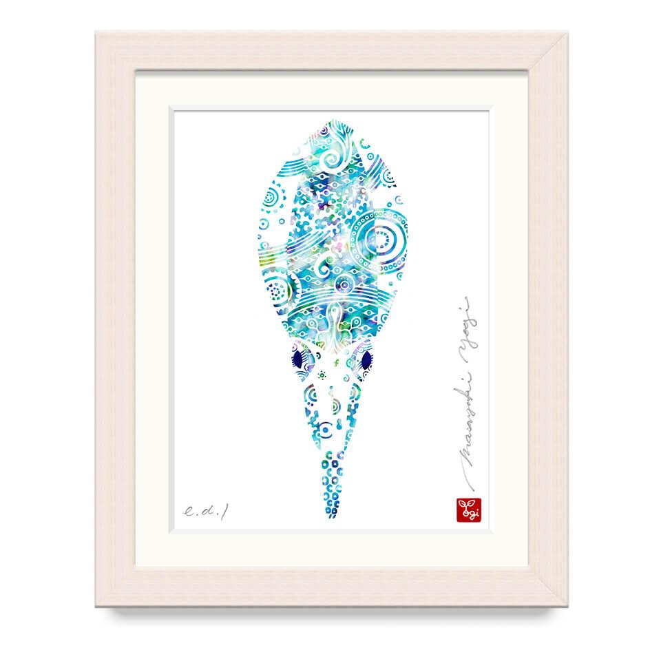アオリイカ / A bigfin squid